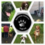 Specialist Detector Dogs
