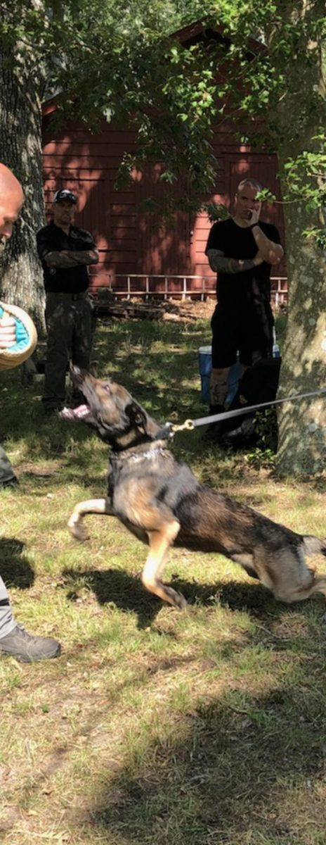 Absolute Control Dog Training